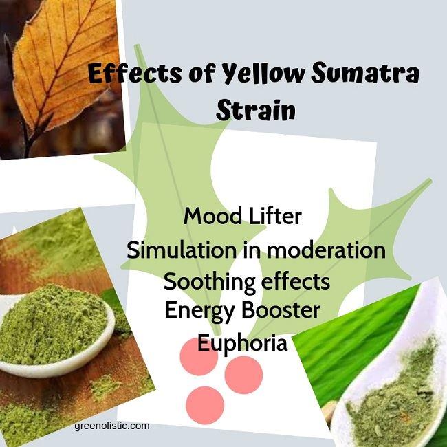 Effects of Yellow Vein Kratom (1)