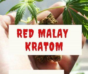 Red Malay Kratom –  Legality – Dosage – Usage & Effects