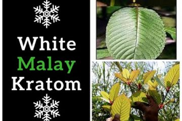 How White Malay Kratom Helps To Improve Productivity?