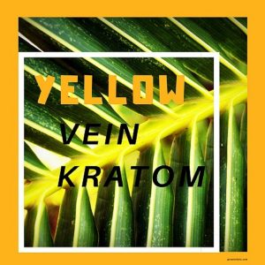 Yellow Vein Kratom MasterGuide About Types & Effects