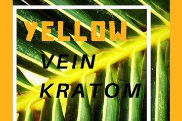 Yellow Vein Kratom Master Guide About Types & Effects